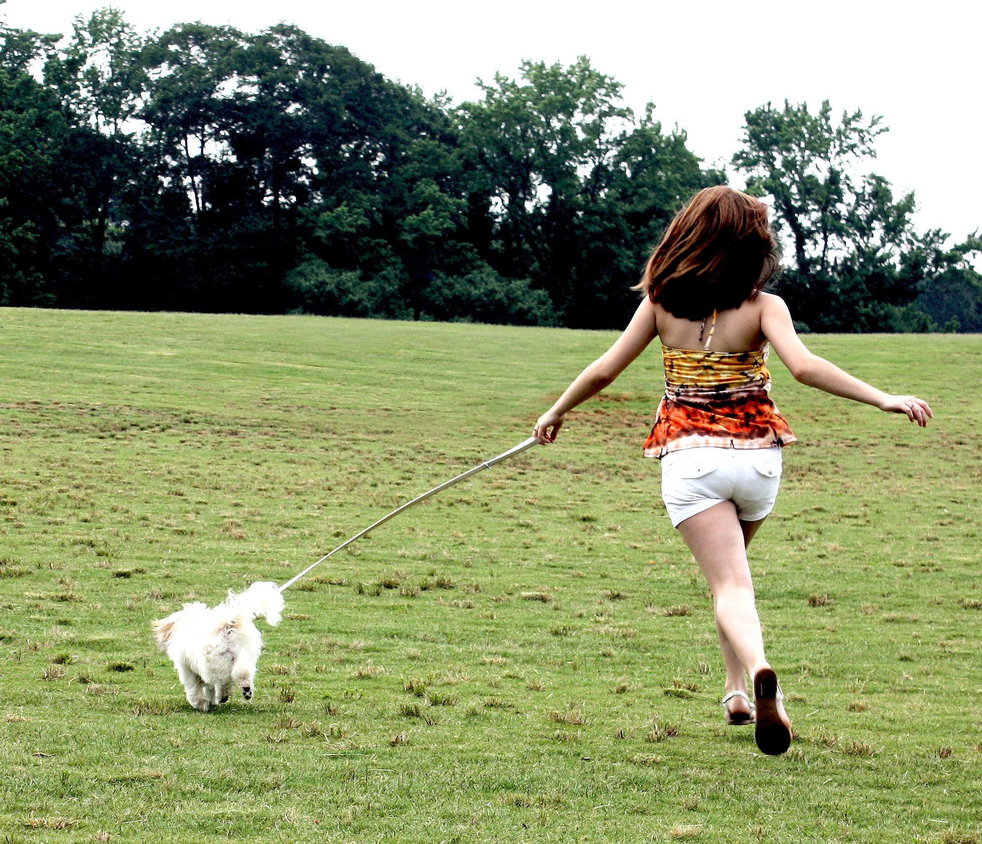 d796f89bae6c Ha kutyát veszel, és szeretnél vele ilyen jellegű gyakorlatokat végezni, a  választásnál vedd figyelembe, hogy melyik kutya milyen kondícióban van.