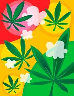 Cannabis-DNS