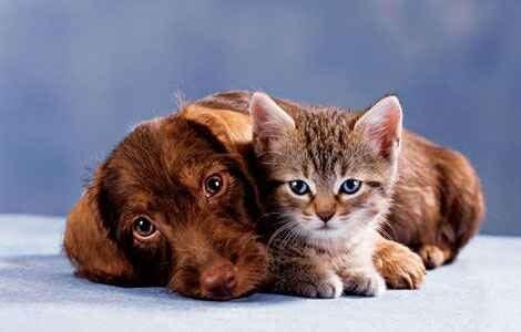 mi szeretjük egymást