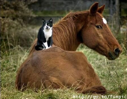 állati tolerancia